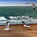 Seagulls 2 by Natalia Tejera