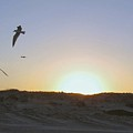 Seagulls At Sunset 2 by Camera Candy