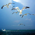 Seagulls  by Brittany H