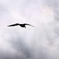 Seagull's Sky 2 by Jouko Lehto
