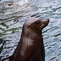 Seal by Glenn Gordon