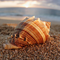 Seashell In The Sand by Vince Cavataio - Printscapes