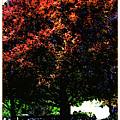 Seattle Chateau Ste Michelle Tree by Joan  Minchak