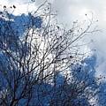 Sedona Sky by Kevin Igo