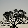 Senset Trees by Rob Hans