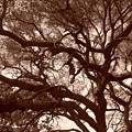 Sepia Branch Burst by Gwendolyn Barnhart