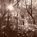 Sepia Forest by Erica Carlson