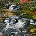 Serene Mountain Stream by Shari Jardina