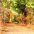 Serene Path by Tracy Daniels