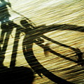 Shadow Of A Person Riding A Bicycle by Sami Sarkis