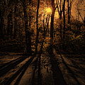 Shadows by Lourry Legarde