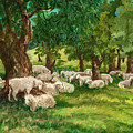 Sheep Pasture Ithaca New York by Ethel Vrana
