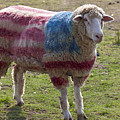 Sheep With American Flag by Garry Gay