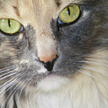 Shelby's Eyes 4 by Lenore Senior