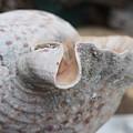 Shell Time by Erin Rosenblum