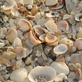 Shells On Beach by Alice Markham