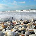 Shells On The Beach by Sean Allen