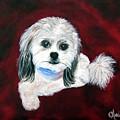 Shih Poo by Chrissie Leander