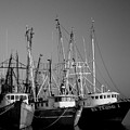 Shrimper Fleet by Mark Grayden