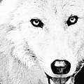 Shy Wolf by Debra     Vatalaro
