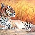 Sidhartha by Syndi Michael