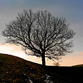 Silhouette Of A Tree On A Winter Day by Christine Till