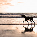 Silhouette Of Dog On Beach At Sunset by Susan Schmitz