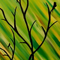 Silhouetted Trees And Birds by Bethany Bise