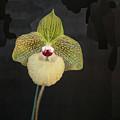 Single Orchid by Liz Santie