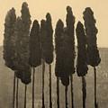 Skinny Trees In Sepia by Marsha Heiken