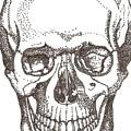 Skull by Americo Salazar