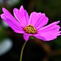Sky Facing Flower by Douglas Barnett