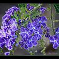 Sky Flower Window  by Carol Groenen