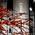 Slc Temple Red White N Black by La Rae  Roberts