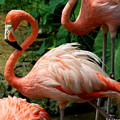 Sleeping Flamingo by Barbara Bowen