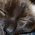 Sleeping Siamese Cat by Ryan Vaal