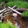 Slow Stream by J P Lambert