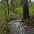 Small Stream In The Woods by Kent Lorentzen