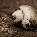 Snails Pace by Kim Vetten