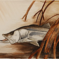 Snook In The Mangroves by Jeff Harrell