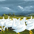 Snow Geese Gathering by Bob Patterson