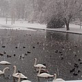 Snow Over Swan Lake by Valia Bradshaw
