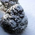 Snowy Morn by Annie Babineau