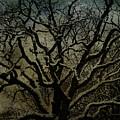 Snowy Tree by Jill Smith