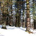 Snowy Wilderness by Paul Sachtleben