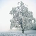 Snowy Winter Landscape by John Foxx