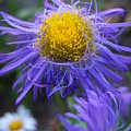 So... Purple  by Vicki Berchtold