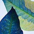 Something Blue by Bobby Villapando