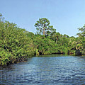 Sout Fork Of St. Lucie River by Richard Nickson