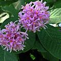 South African Flower 2 by Douglas Barnett